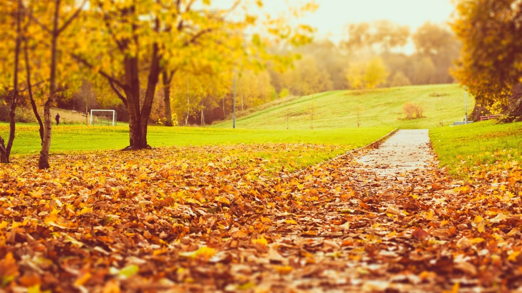 park-autumn-trees-yellow-and-orange-leaves_1920x1080